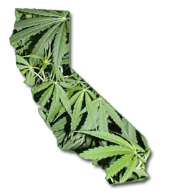 marijuana-california