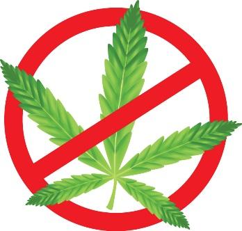 no weed