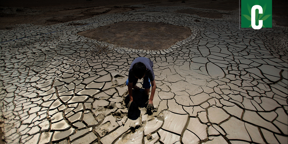 Legalization could help California with drought problems